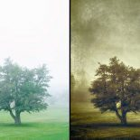 Tree in the Fog 2 – Behind the Scenes