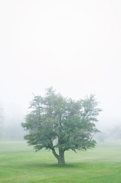 Tree in the Fog 2 A