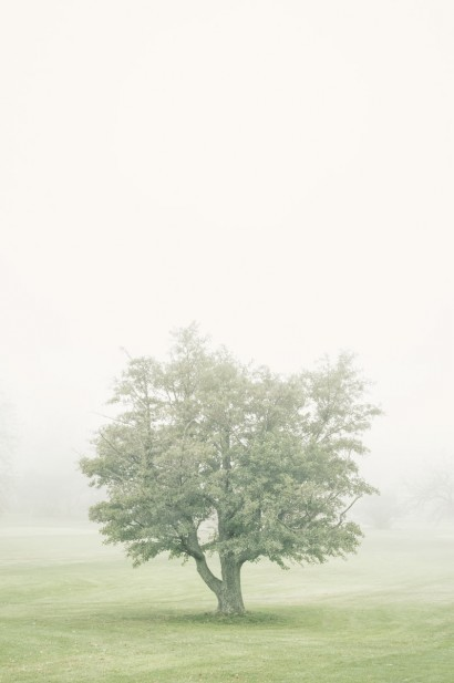 Tree in the Fog 2 B