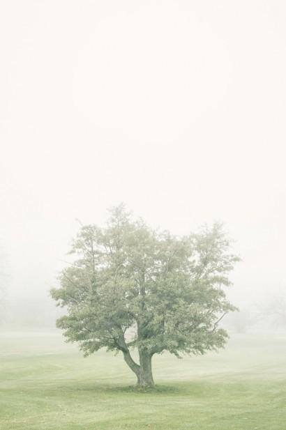 Tree in the Fog 2 B