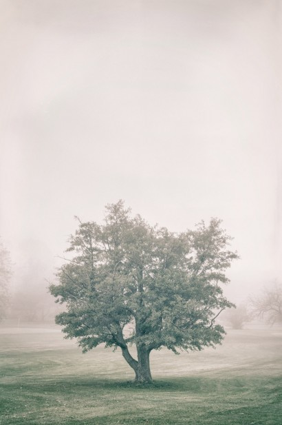Tree in the Fog 2 C