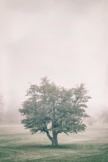 Tree in the Fog 2 C