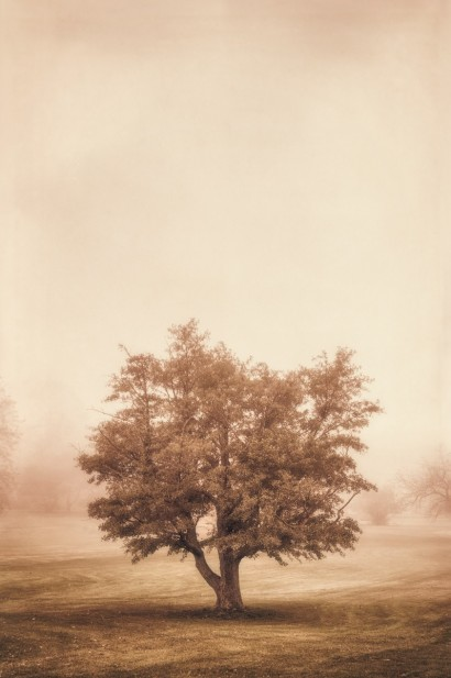 Tree in the Fog 2 D