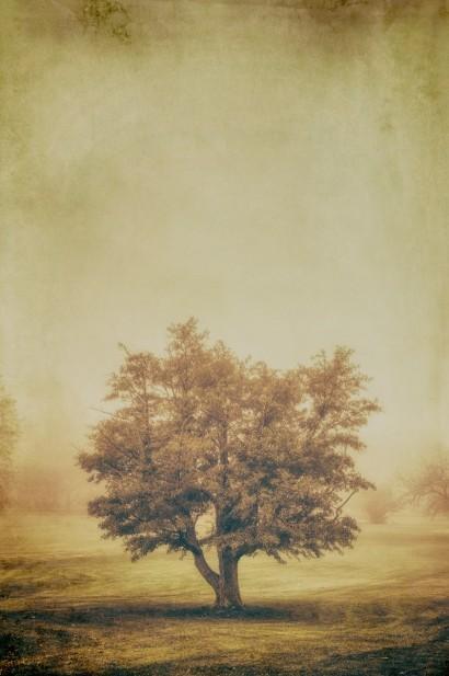 Tree in the Fog 2 E