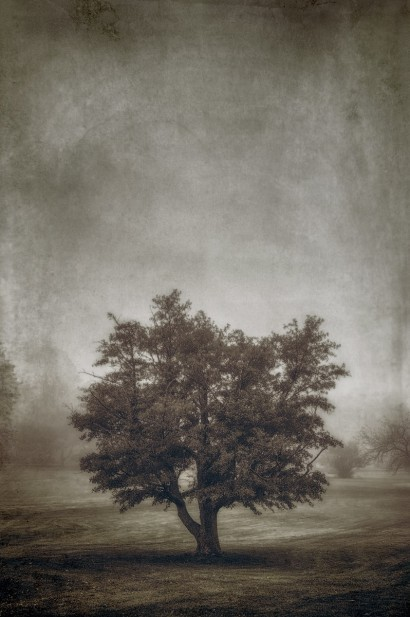 Tree in the Fog 2 F
