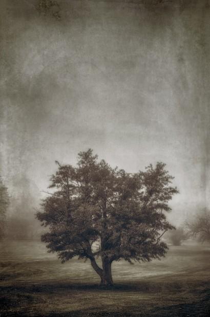 Tree in the Fog 2 F