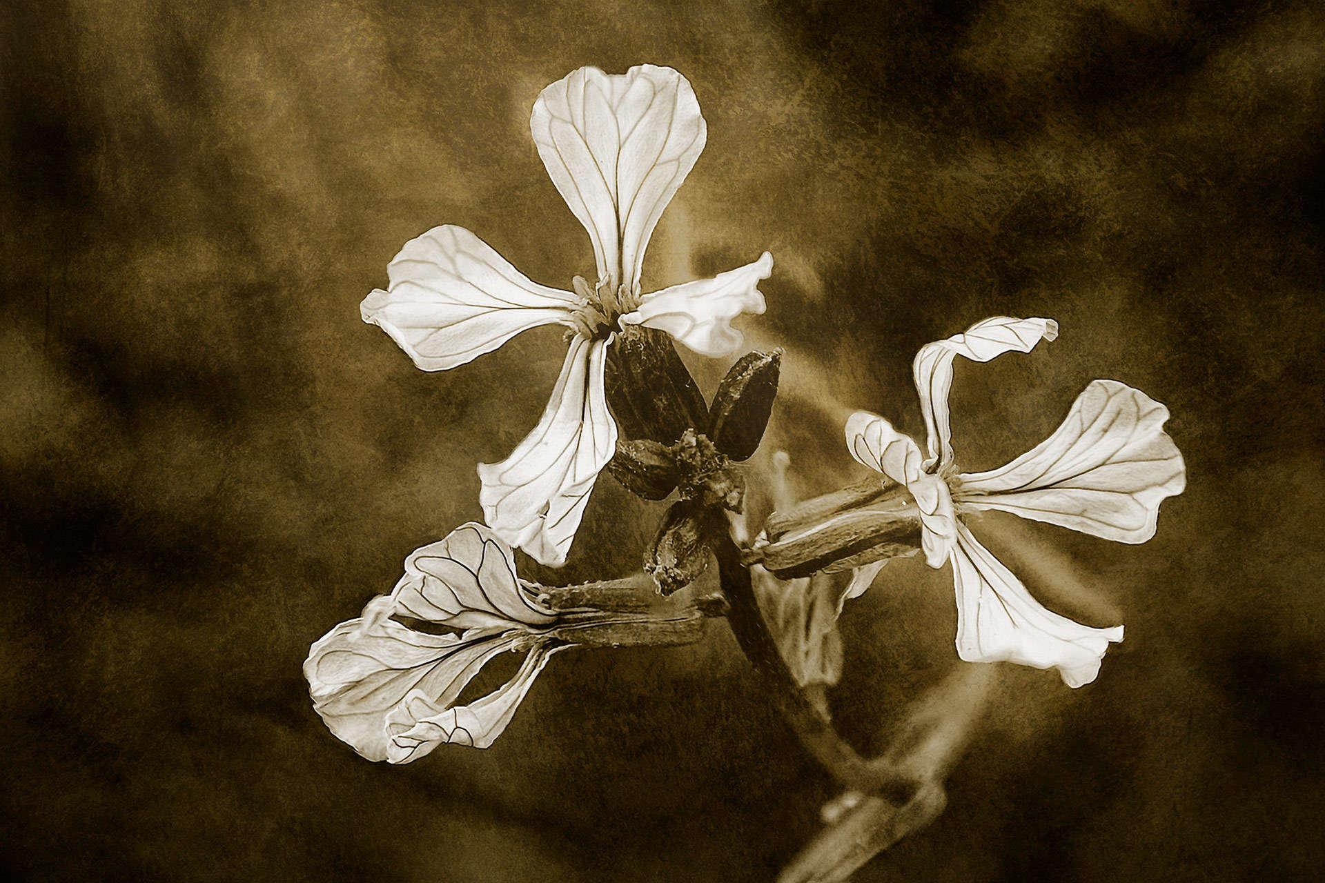 The Last Flowers of Autumn