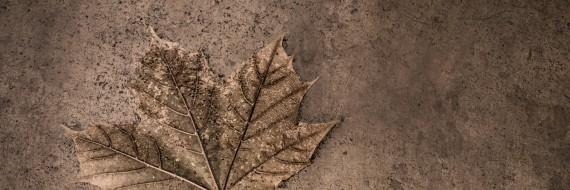 One Leaf - December 1st