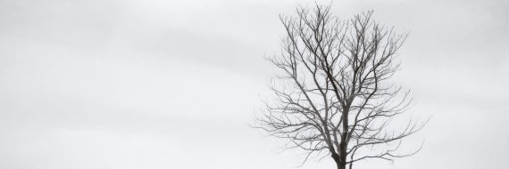 Black Tree White Sky