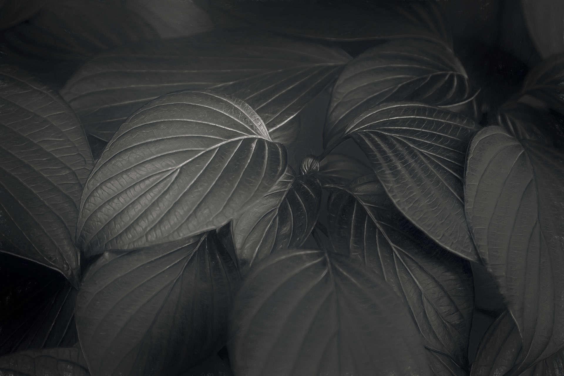 Black Leaves