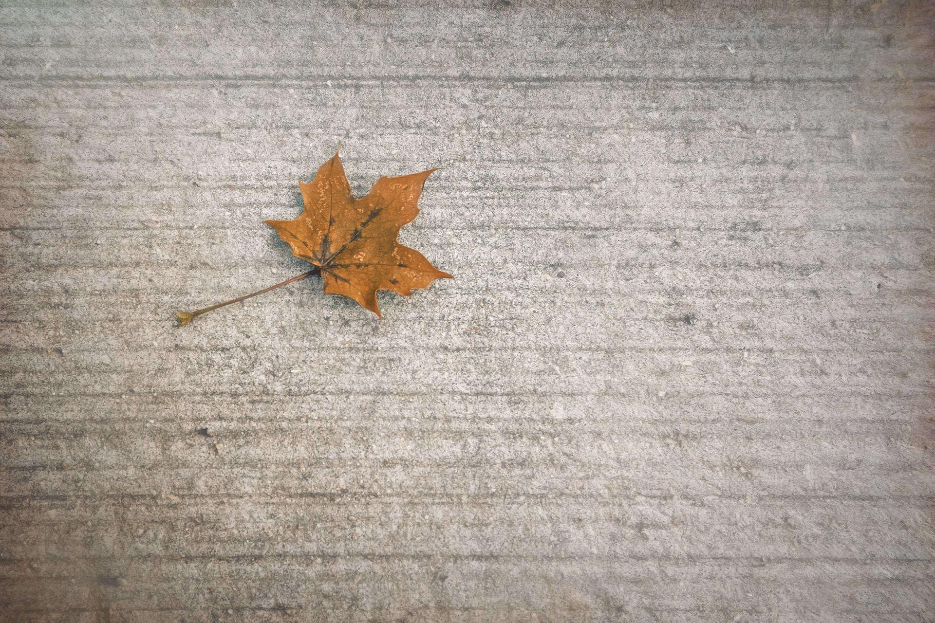 A Hint of Autumn