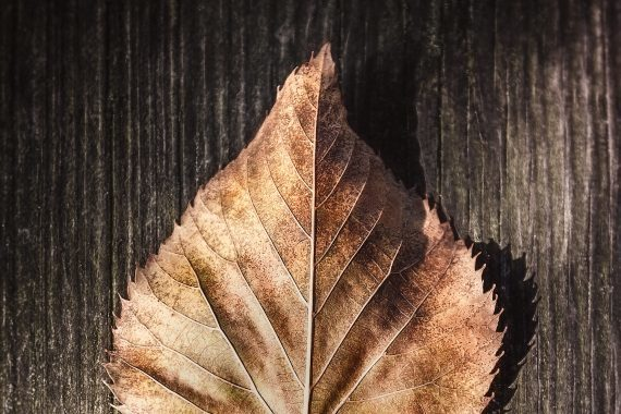 Dry Leaf on Wood