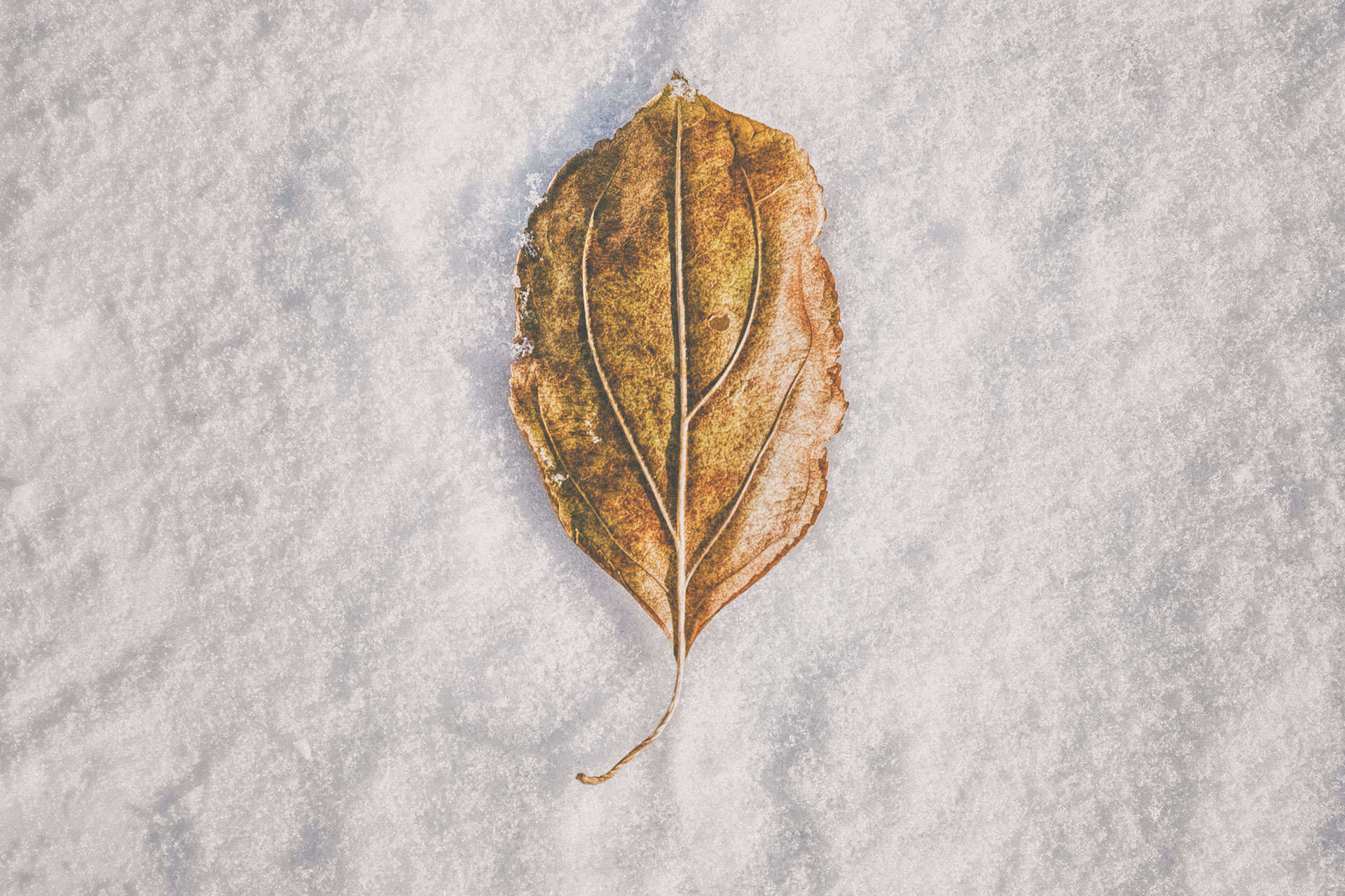 Clash of Seasons